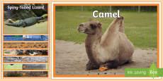 Arabian Animals Display Photos