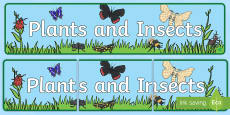 Plants and Insects Display Banner