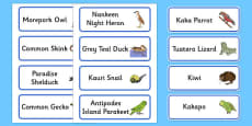 New Zealand Animals Word Cards