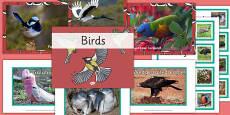 Australian Birds pack