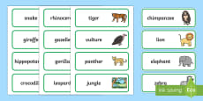 Word Cards to Support Teaching on Rumble in the Jungle