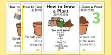 How to Grow a Plant Display Posters Chinese Mandarin Translation