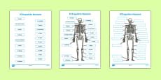 Human Skeleton Labelling Sheets Scientific Names Spanish