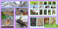* NEW * Bird Pictures Resource Pack
