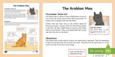 Arabian Mau Fact File