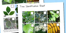 Tree Identification Photo Work Sheet