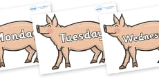 Days of the Week on Pigs to Support Teaching on Pig in the Pond