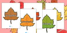Colour Words on Autumn Leaves Polish