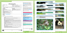 EYFS I Went to the Zoo Adult Input Plan and Resource Pack