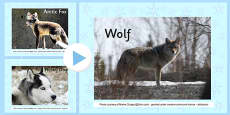 Winter Animals Photo Display PowerPoint