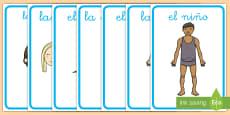 Pósters DIN A4: Las partes del cuerpo