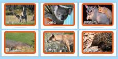 Australian Animal Display Posters