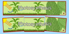 Photosynthesis Display Banner