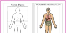 Human Organs Interactive Labelling Activity