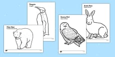 Arctic Animals Colouring Images Polish Translation