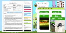 Describing Minibeasts EYFS Adult Input Plan and Resource Pack