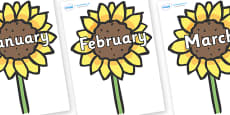 Months of the Year on Sunflowers