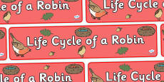 Robin Life Cycle Display Banner