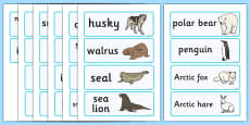 Polar Regions Word Cards