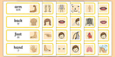 Parts of the Body Topic Words Mandarin Chinese Translation