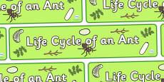 Ant Life Cycle Display Banner