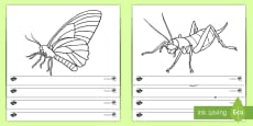 New Zealand Bugs and Insects Colouring Pages
