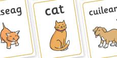 Scottish Gaelic Pets Display Posters