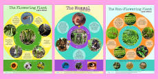 Comparing Different Life Cycles Display Posters Pack