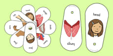 Parts Of The Body Communication Fans