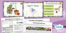 PlanIt - D&T LKS2 - Edible Garden Lesson 3: Sweet Strawberries Lesson Pack