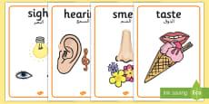 The Five Senses Posters Arabic Translation