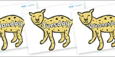 Days of the Week on Cheetahs