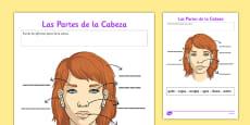 Ficha de actividad Las partes de la cabeza