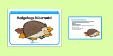 Foundation PE (Reception) Hibernating Hedgehogs Cool-Down Activity Card