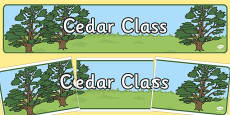 Cedar Tree Display Banner