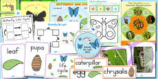 Australia - Butterfly Life Cycle Resource Pack