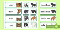 Bears Word Cards