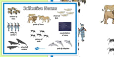 Collective Nouns Display Poster