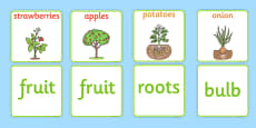 Fruit and Vegetable Plant Matching Cards