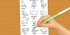 Pets Dictionary Colouring Sheet