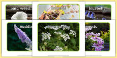Flowers Display Photos