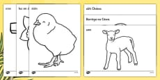 Easter Colouring Images Gaeilge
