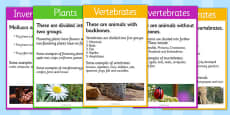 Classify Living Organisms, Vertebrates and Invertebrates Cards