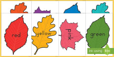 Fall Leaves Color Display Posters