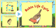 Robin Life Cycle PowerPoint