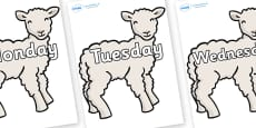 Days of the Week on Lambs