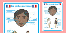 French Body Parts Posters