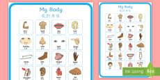 My Body Vocabulary Poster English/Mandarin Chinese