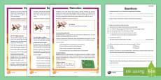 KS2 Ramadan Differentiated Reading Comprehension Activity