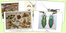 Insect Art Photopack